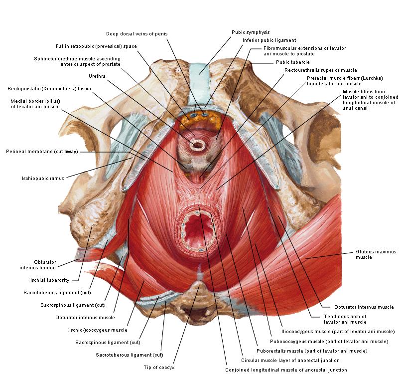 psoriasis geslachtsdelen