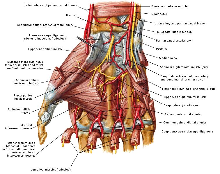 Entrapment nervus ulnaris (zenuwbeklemming)