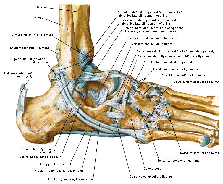 pijn in de gewrichten en spieren