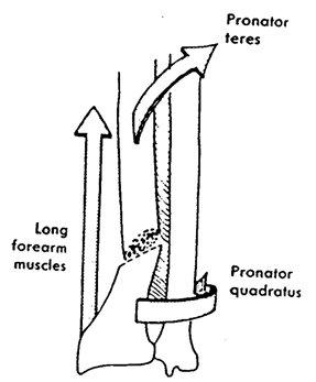 răni de abducție a articulației gleznei