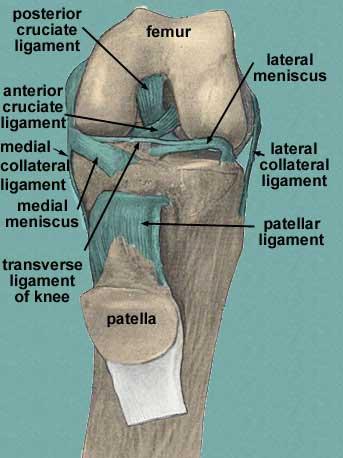linker knie gebroken